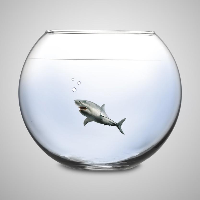 Shark-Bowl